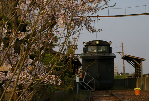 Sakuradensya1