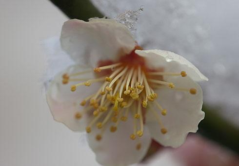 Nagori2