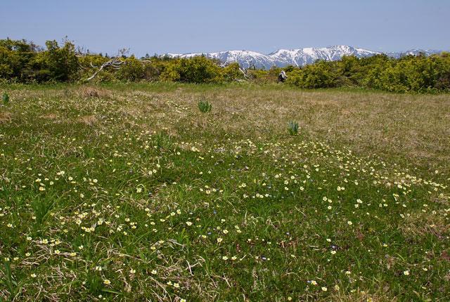 会津駒を望む湿原